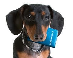 Passaporte de Cães e Gatos