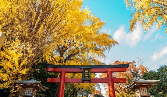 imagem Qual a melhor época para viajar para o Japão?