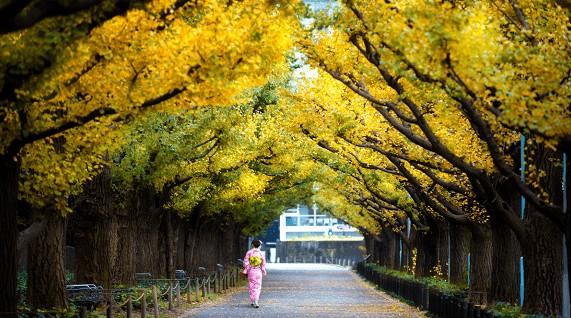 Qual a melhor época para viajar para o Japão