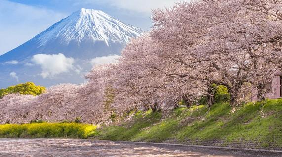 imagem Onde fica o Monte Fuji?